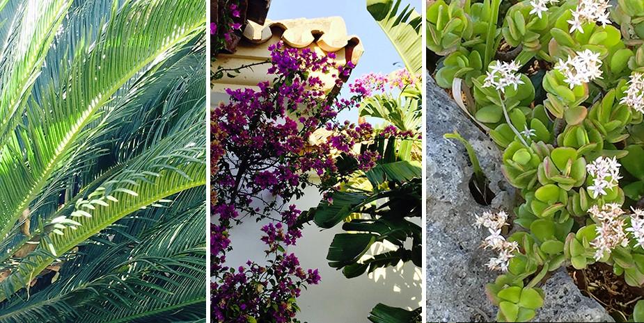 Large villa Estepona Villa Jasmine gardens